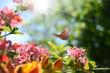 Leinwanddruck Bild Schmetterling 595