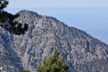 Pine Mountain In The San Gabri...