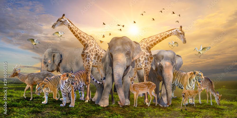 Fotografía  Large group of african safari animals