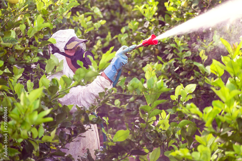 Fotografía Worker fumigating plantation of lemon trees in Spain