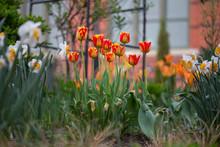Spring Flower Blossoms Us Botanic Garden Washington Dc