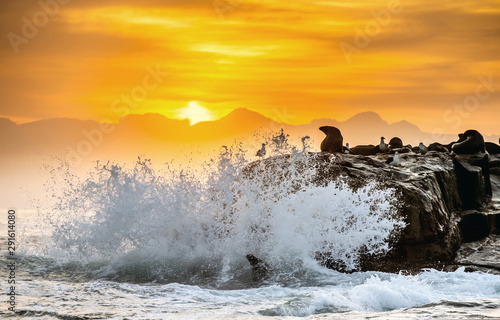 Foto op Canvas Bleke violet Sunrise at Seal Island. South African (Cape) fur seals (Arctocephalus pusillus pusillus), Colony of cape fur seals. False Bay, Western Cape, South Africa, Africa.