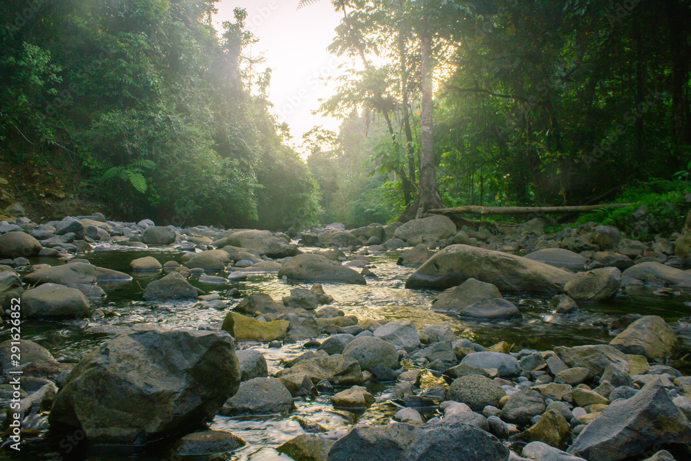 Fototapety, obrazy: nature indonesia forest with river