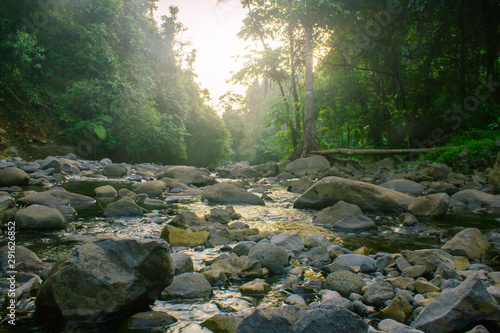 Wall Murals Forest river nature indonesia forest with river