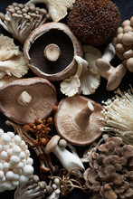 Assortment Of Various Edible Fresh Raw Mushrooms