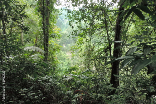 Montage in der Fensternische Olivgrun trees in the forest