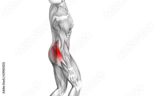 Fototapety, obrazy: Conceptual hip human anatomy with red hot spot inflammation articular joint pain for leg health care therapy or sport muscle concepts. 3D illustration man arthritis or bone sore osteoporosis disease