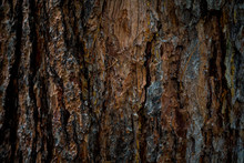 The Texture Of The Bark Of A Tree. Background Image Of Macro Photo Of Bark With Mold