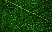 Background Image Of A Leaf Of ...