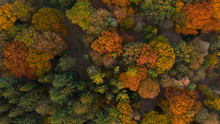 Aerial View Of Beautiful Colored Autumn Forest.