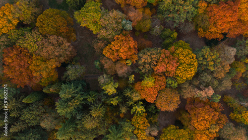 Photo Aerial view of beautiful colored autumn forest.
