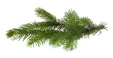 Christmas Tree Branch Isolated...