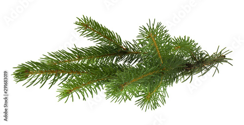 Foto op Canvas Bomen Christmas tree branch isolated on white background