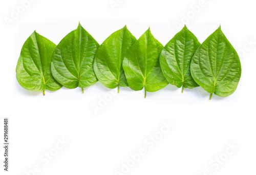 Green betel leaves, Fresh piper betle on white. Wallpaper Mural