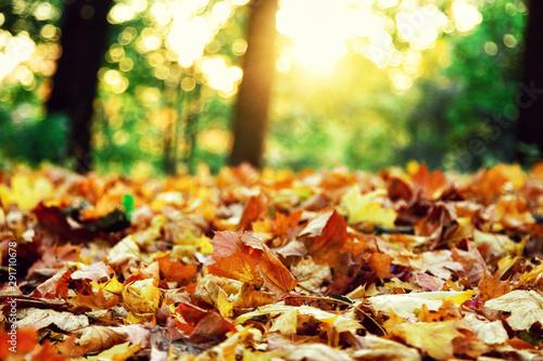 Cuadros en Lienzo  Goldener Herbst