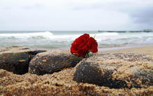 Funeral Flower, Lonely Red Ros...