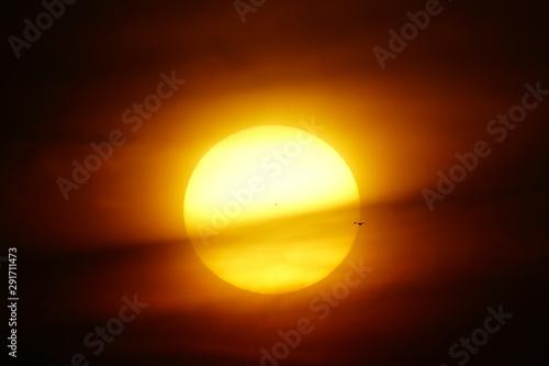 sunset with solar disk pierced by birds in flight Wallpaper Mural