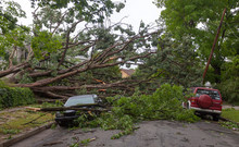Fallen Tree Hurricane Tornado ...