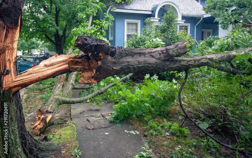 Fototapeta Fallen tree hurricane tornado storm devastation. obraz