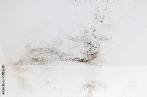 Valokuva  Mold on white wall. Fungus on white background.