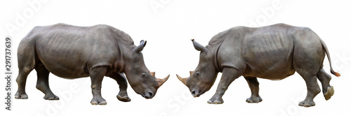 La pose en embrasure Rhino Rhinoceros isolated on white background.