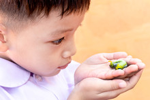 A Child Holding A Green Caterpillar In His Hand. Caterpillar On The Hands With Blur Background. Close Up Beautiful Green Tea Caterpillar.