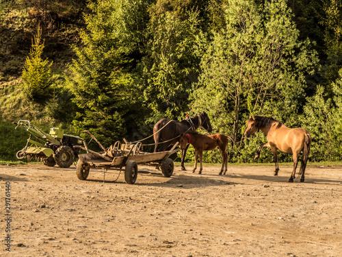 Fototapeta Karpackie - Ukraina -  konie czy nowoczesny sprzęt obraz