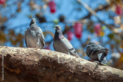 three pigeon standing on a tree branch in park