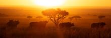 Masai Mara Buffalo Sunrise