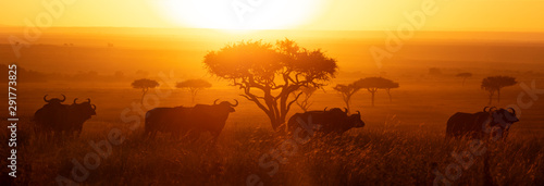 Canvas Prints Trees Masai Mara Buffalo Sunrise