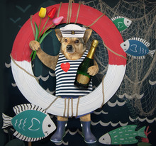 The Dog Dressed In Sailor Clothes Is Holding A Bottle Of Wine And A Bouquet Of Multicolor Tulips On A Lifebuoy Background.