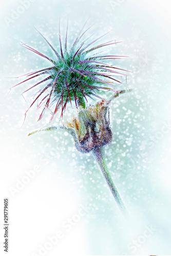 Photo Deflorate Ranunculus acris. Bokeh, blur