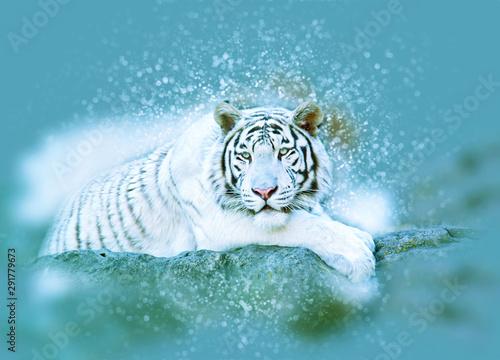 Keuken foto achterwand Tijger White Bengal tiger. Bokeh, blur