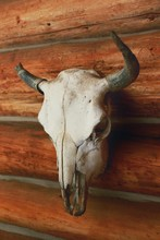 Bison Skull Mounted On A Log W...