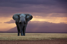 A Lone Elephant Standing In The Distance, Kenya