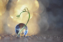 A Dandelion Seed Is Photographed In A Gel Ball