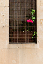 SALAMANCA, SPAIN - SEPTEMBER 2, 2017: A Vine Plant And A Red Geranium Protrude From An Iron Fence Of A Window.