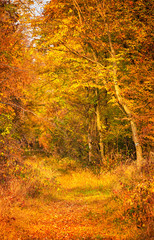 Fototapeta Las Pathway in the forest at autumn