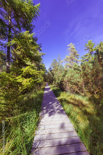 Cuadros en Lienzo  Wooden footpath, hiking trail, nature reserve Wildseemoor, Kaltenbronn, Gernsbac