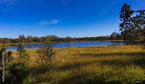 Fotomural Raised bog of the Wildsee at Kaltenbronn, Northern Black Forest, Germany, with birch trees and small pines, territory Bad Wildbad and Gernsbach