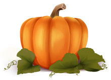 Orange Pumpkin  Illustration. Autumn Halloween Pumpkin, Vegetable Graphic Card Or Print, Isolated On White Background.