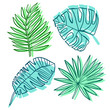 Tropical leaves vector element collection. Jungle leaf
