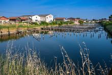 Oyster Farming Harbour Near Ar...
