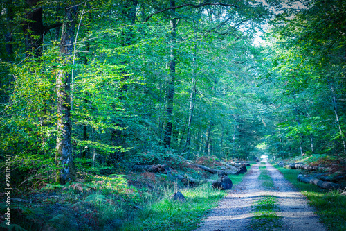 Route dans la forêt Path leading into the forest