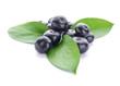 Leinwandbild Motiv Fresh acai berries on white background