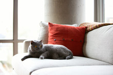 Cute Cat Sitting On A Couch