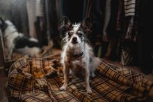 A Cute Dog In A Closet