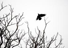 Birds On Bare Branches In The Wild, Travel In Sri Lanka