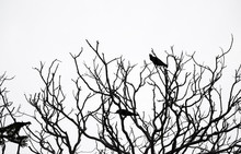 Birds On Bare Branches In The ...