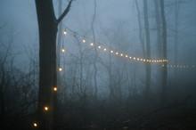 Christmas Lights In Fog